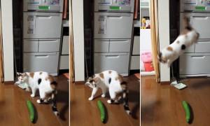 gatto-734080